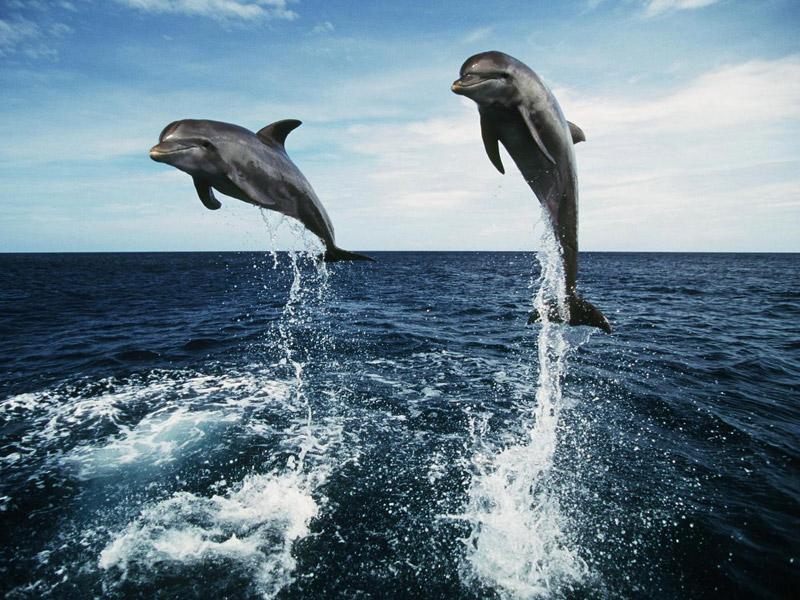 Dolphin Cruising Bali Day Trip