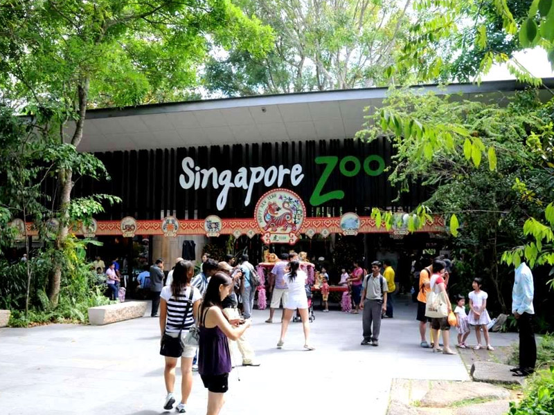 Singapore Zoo Top 10 places to visit in singapore for family in may