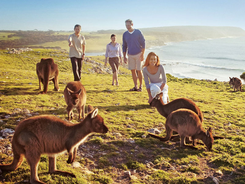 Kangaroo Island Top 10 Honeymoon Destinations in Australia