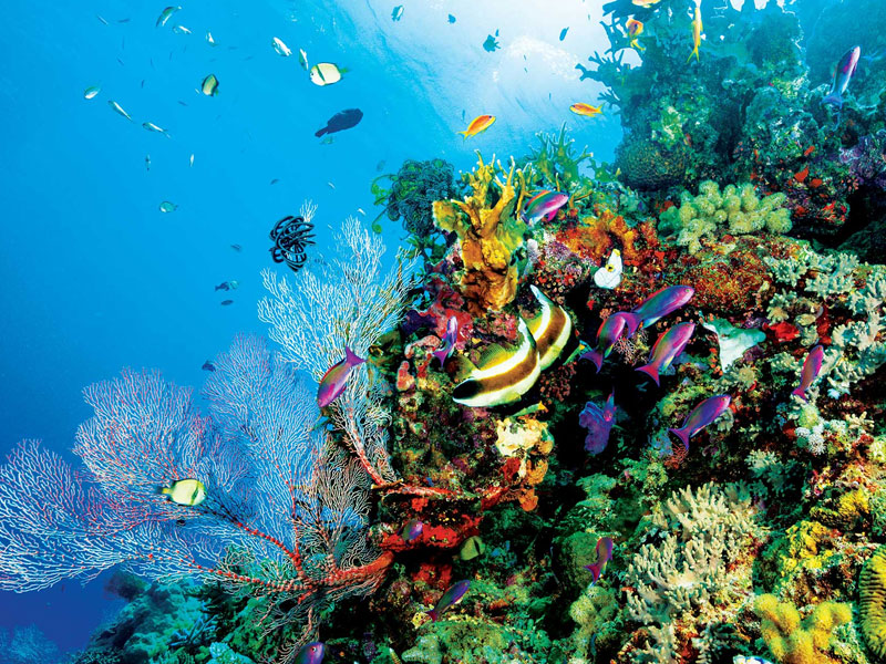 The Great Barrier Reef Top 10 Honeymoon Destinations in Australia