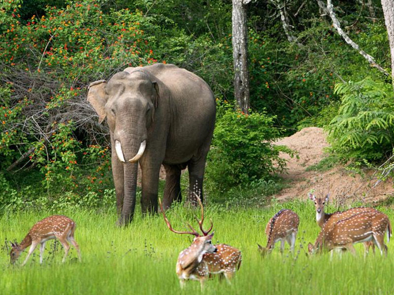 yala national park Top 10 places to visit in sri lanka in june
