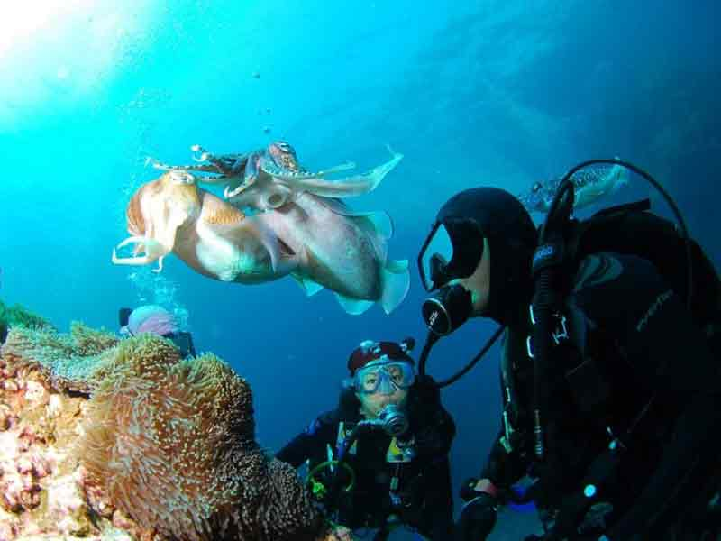 explore the underwater world things to do in south bali