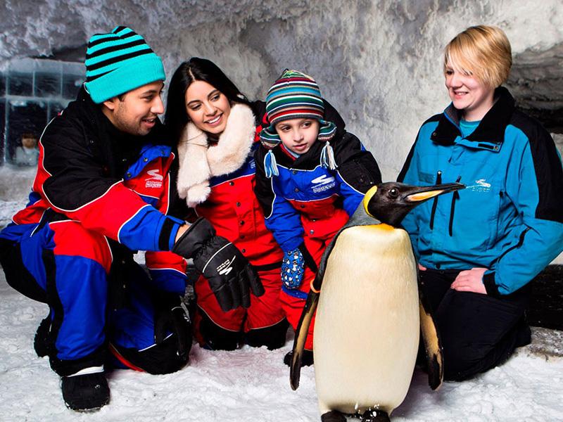 Ski Dubai Top 15 things to do dubai at night
