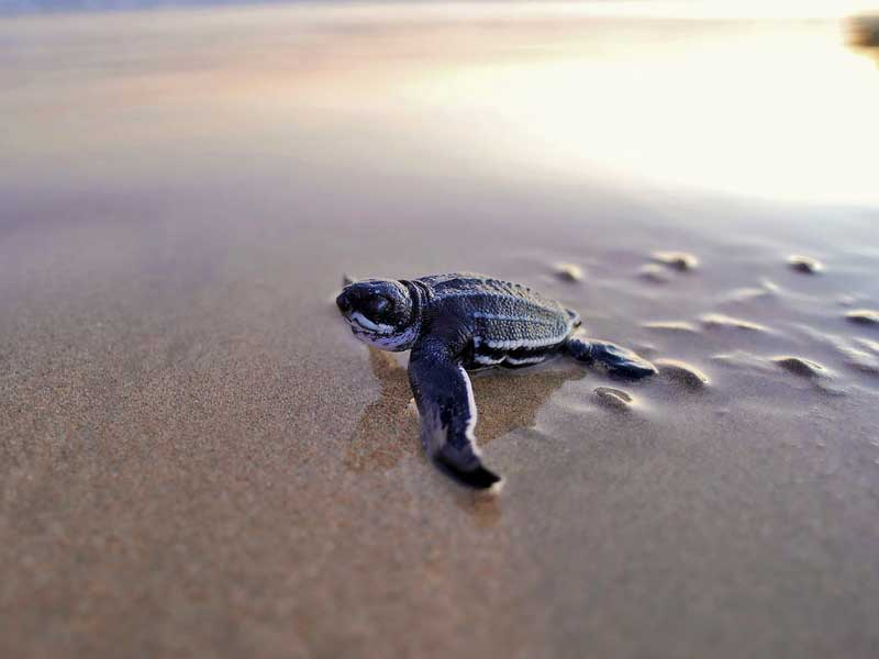 Turtle Beach Things to do on a honeymoon in Sri Lanka