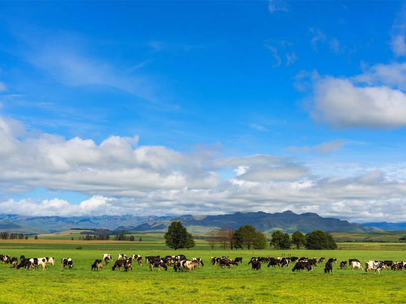 Dullstroom Mpumalanga Top 14 Honeymoon Destinations in South Africa