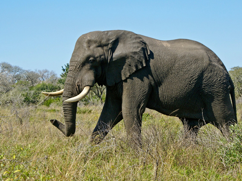 Elephant Coast Top 14 Honeymoon Destinations in South Africa