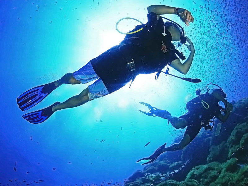 Diving top 12 things to do in phi phi island thailand