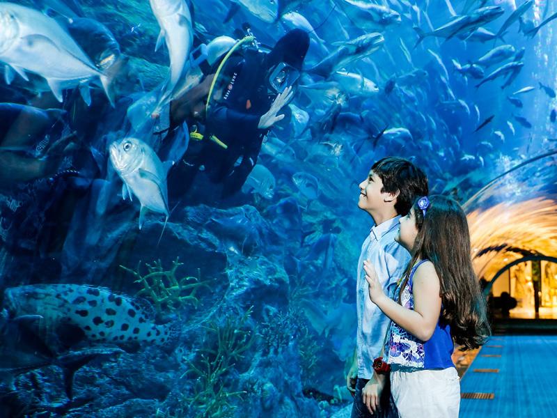 The Dubai Aquarium top 14 honeymoon destination in dubai