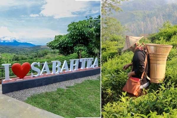 Sabah tea plantation 10 places to visit in Sabah Malaysia